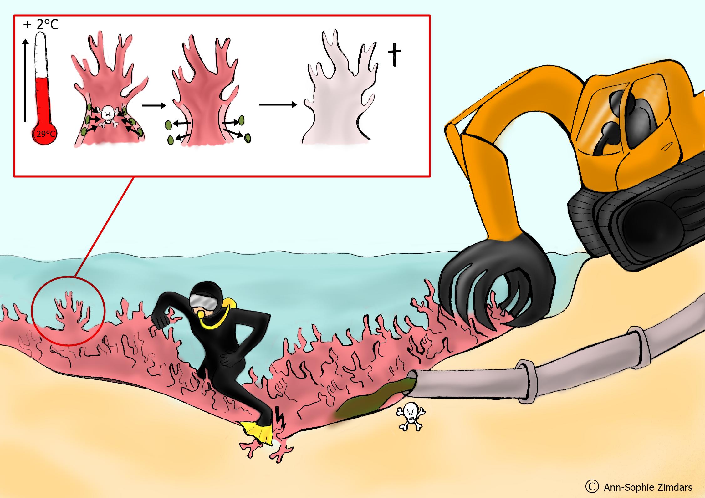 Korallenriff Aufbau